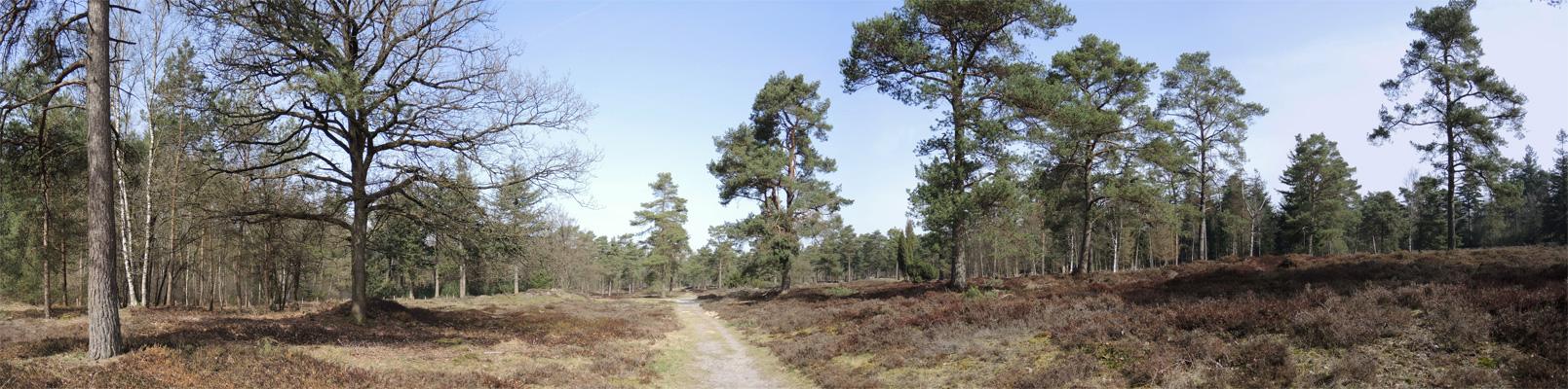 Boswachterij-Ruinen-Groene-route-2-voetzoekers