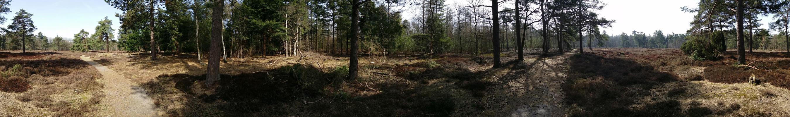 Boswachterij-Ruinen-Groene-route-voetzoekers