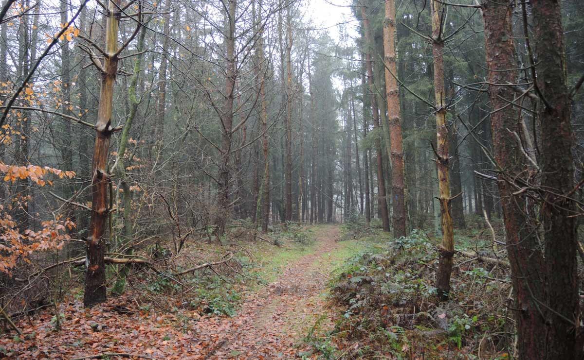 Landgoed Boschoord – witte route 10 – voetzoekers