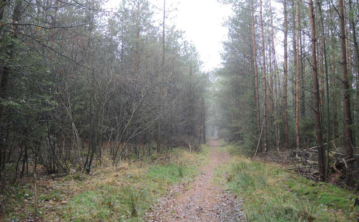 Landgoed Boschoord – witte route 11 – voetzoekers