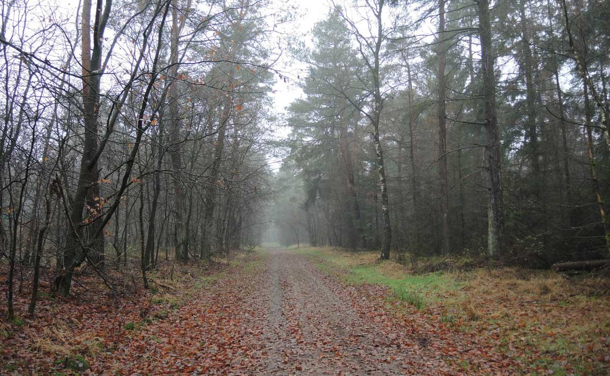 Landgoed Boschoord – witte route 2 – voetzoekers