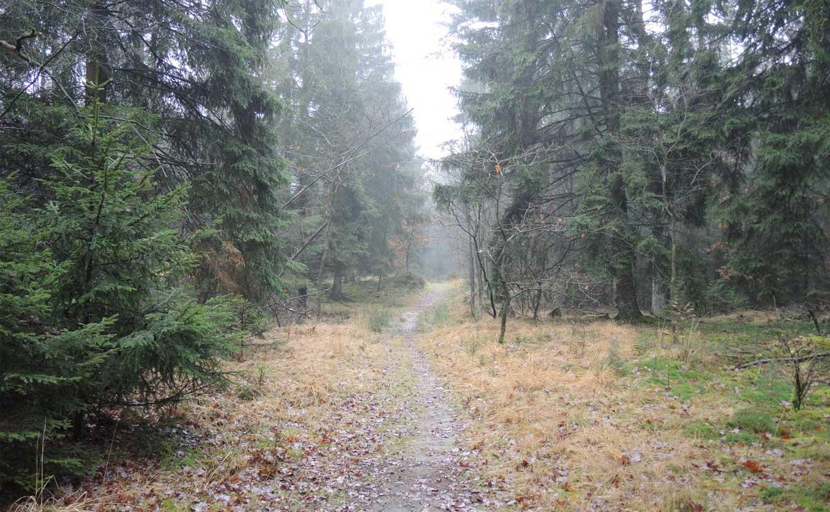 Landgoed Boschoord – witte route 3 – voetzoekers