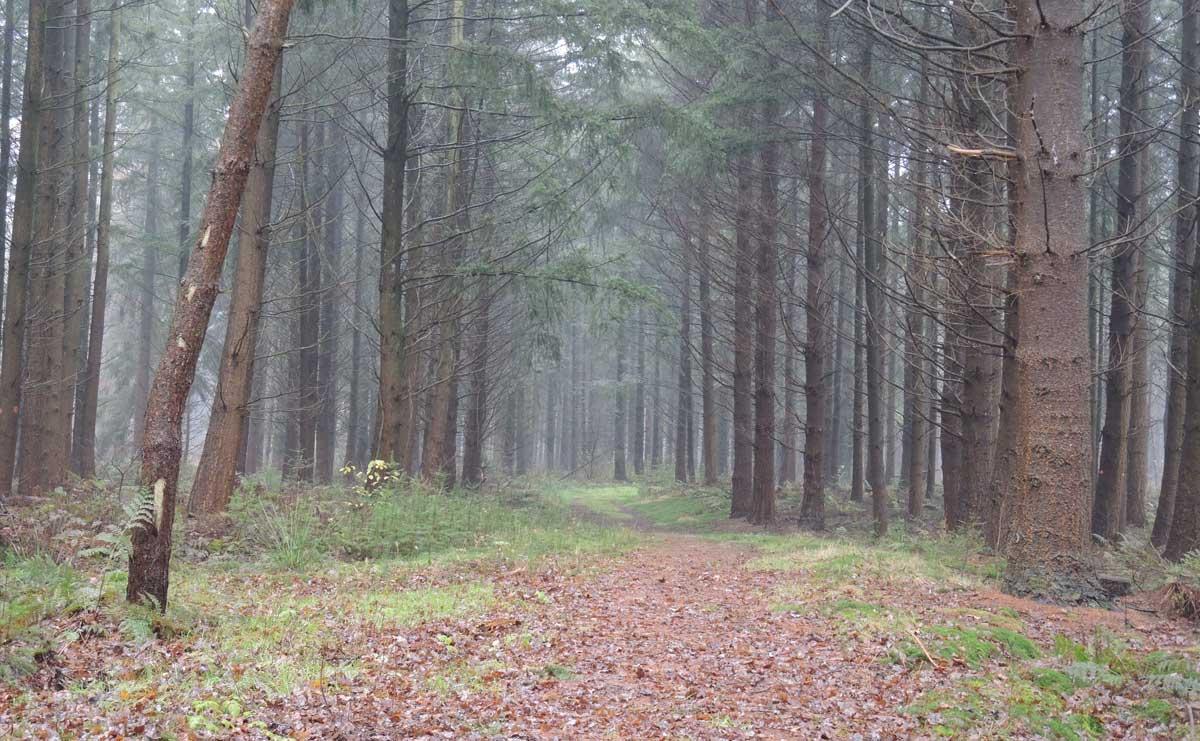 Landgoed Boschoord – witte route 4 – voetzoekers