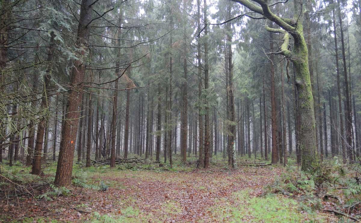 Landgoed Boschoord – witte route 5 – voetzoekers