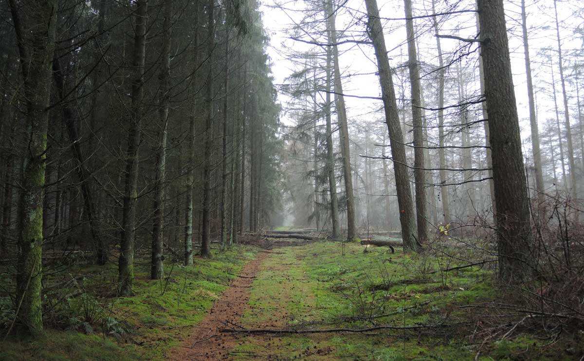 Landgoed Boschoord – witte route 6 – voetzoekers