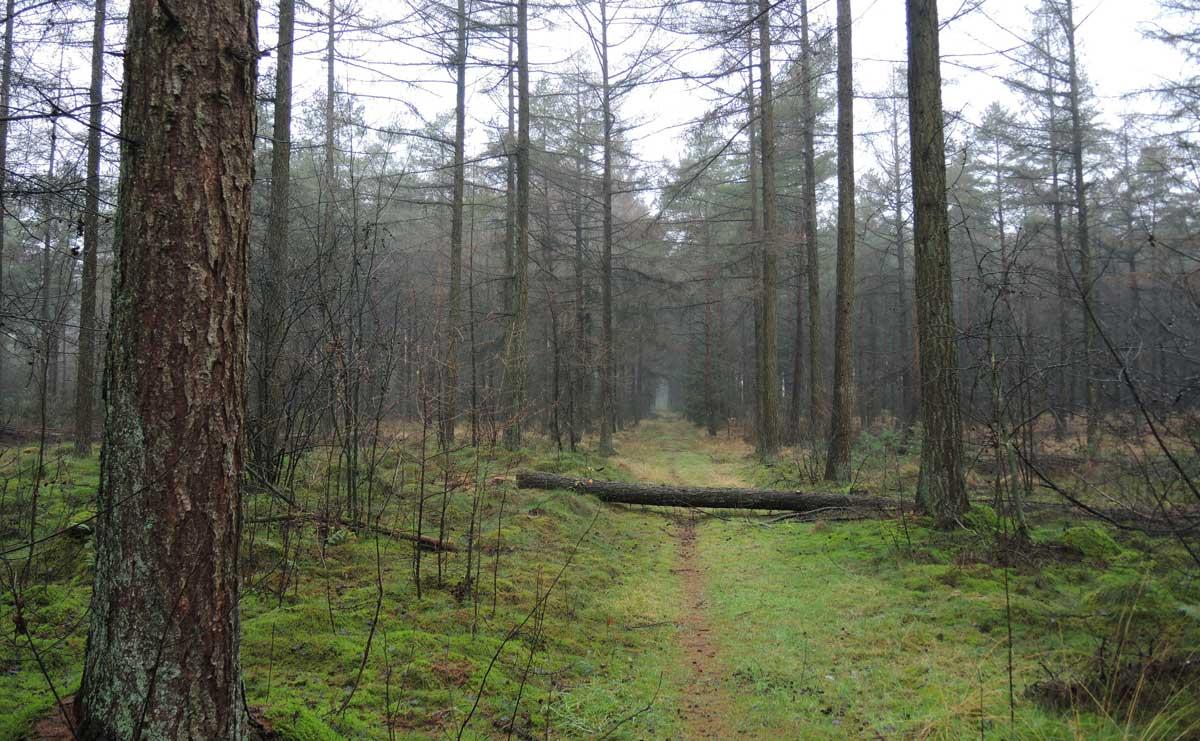 Landgoed Boschoord – witte route 7 – voetzoekers