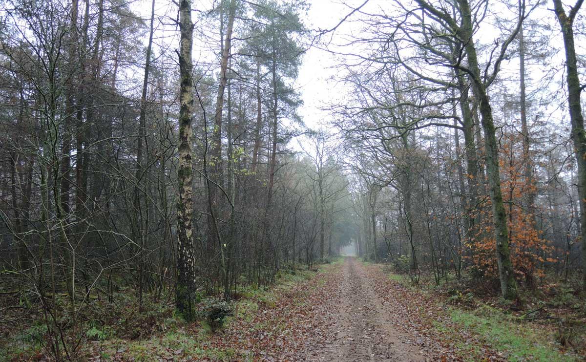 Landgoed Boschoord – witte route 8 – voetzoekers