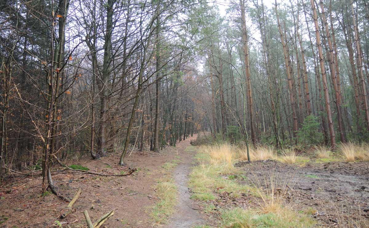 Landgoed Boschoord – witte route 9 – voetzoekers