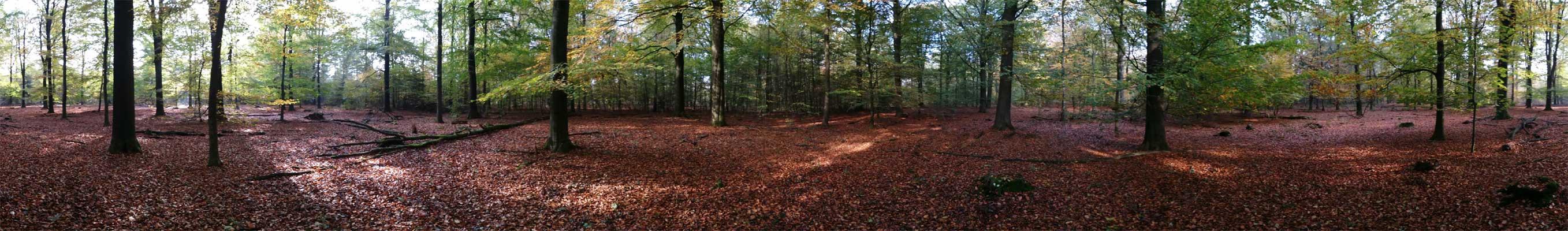 boswachterij-gees-groene-route-panorama-III-voetzoekers