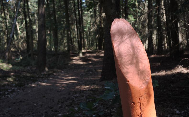 Natuurbelevingspad Westerwolde – 1 Start route – voetzoekers