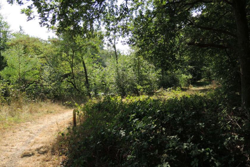 Natuurbelevingspad Westerwolde – 12 Vervolg route – voetzoekers