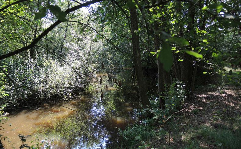 Natuurbelevingspad Westerwolde – 14 Ruiten Aa – voetzoekers