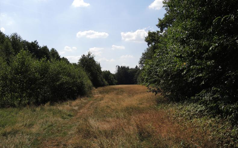 Natuurbelevingspad Westerwolde – 15 Hooiland – voetzoekers