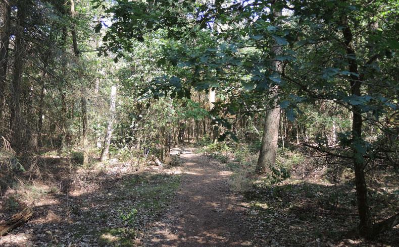 Natuurbelevingspad Westerwolde – 2 Bos – voetzoekers
