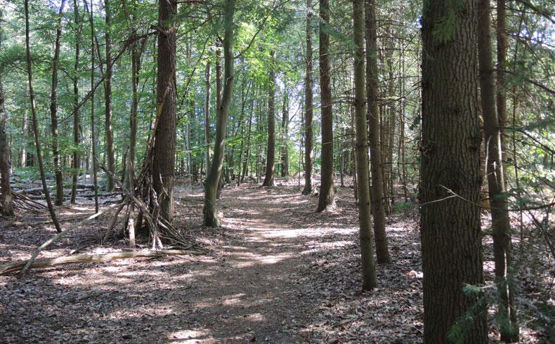 Natuurbelevingspad Westerwolde – 3 Hutten in speelbos – voetzoekers