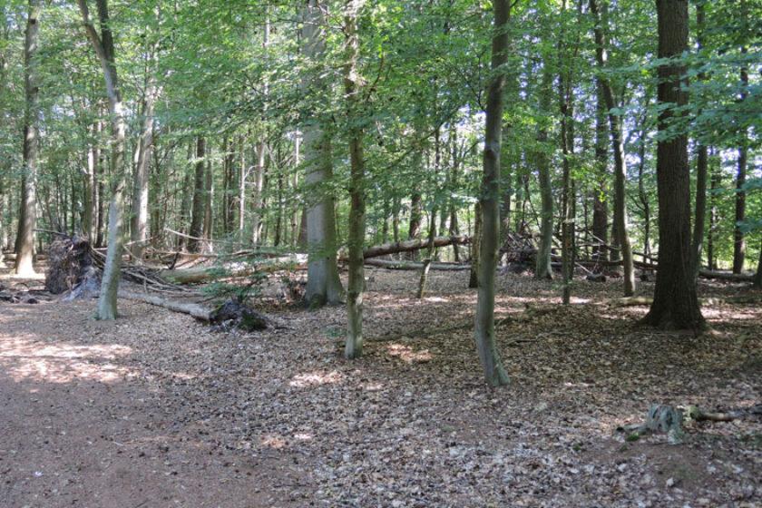 Natuurbelevingspad Westerwolde – 4 Omgevallen bomen speelbos – voetzoekers