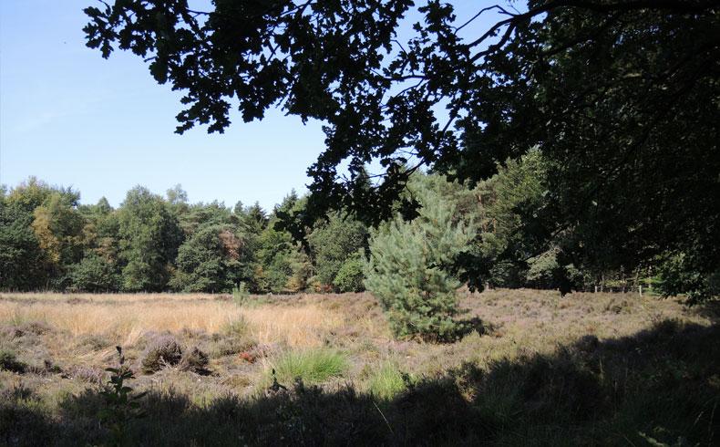 Natuurbelevingspad Westerwolde – 5 Heideveld – voetzoekers