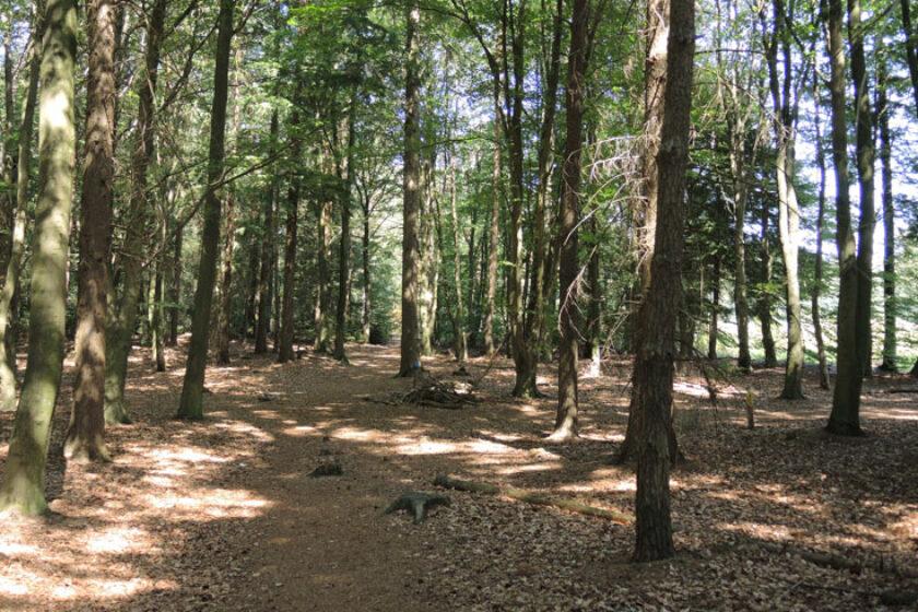 Natuurbelevingspad Westerwolde – 6 Bos bij ven – voetzoekers