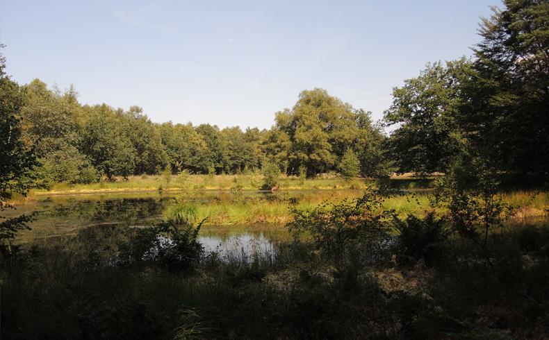 Natuurbelevingspad Westerwolde – 7 – Ven – voetzoekers