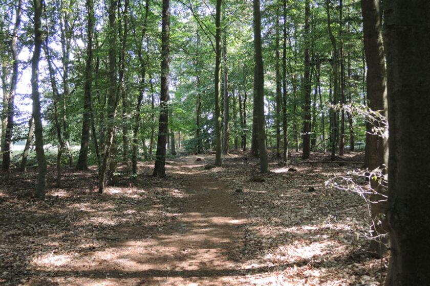 Natuurbelevingspad Westerwolde – 8 Bospad – voetzoekers