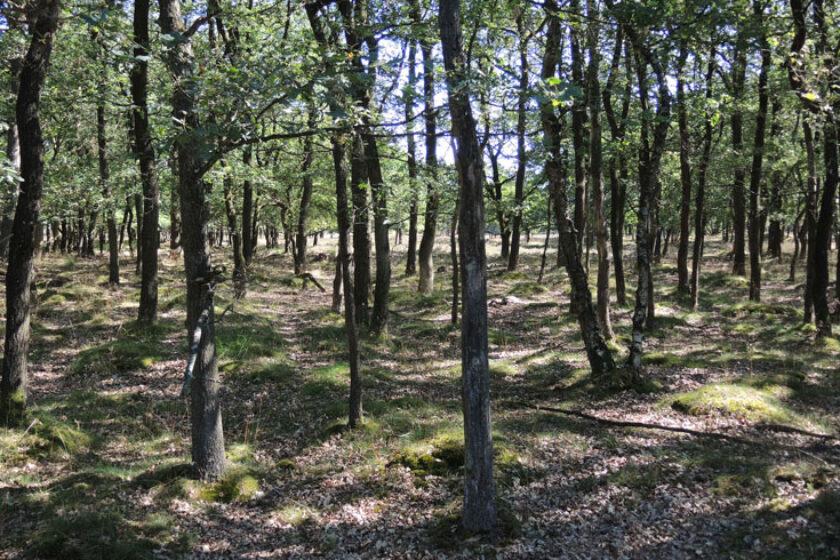 Orvelterzand – 10 bosheide – voetzoekers