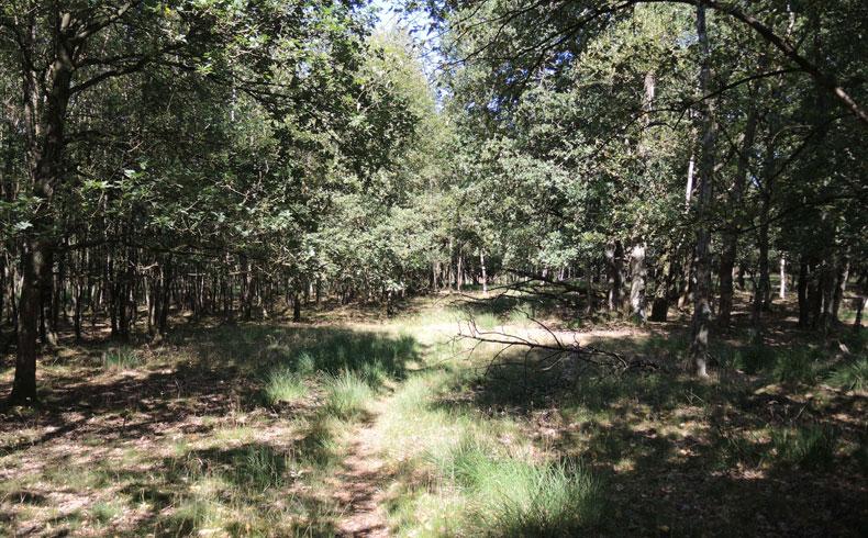 Orvelterzand – 11 pad door bos – voetzoekers