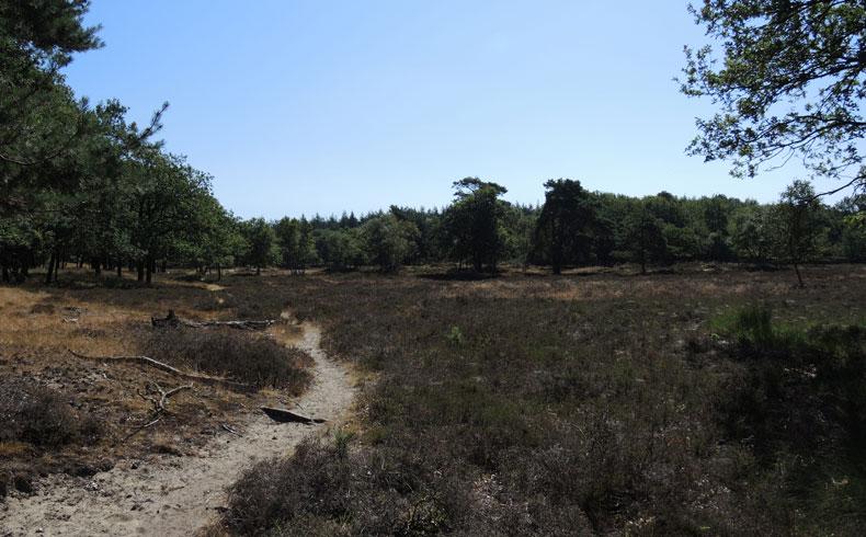 Orvelterzand – 12 open terrein – voetzoekers
