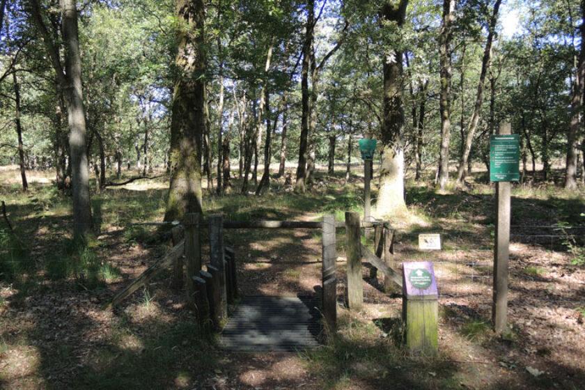 Orvelterzand – 2 wildrooster – voetzoekers