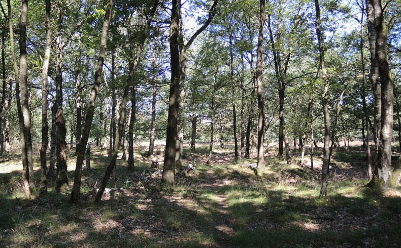 Orvelterzand – 3 bos begin van route – voetzoekers