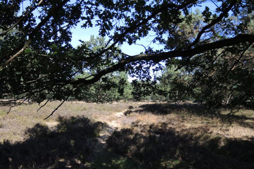 Orvelterzand – 4 overgang bos heide – voetzoekers