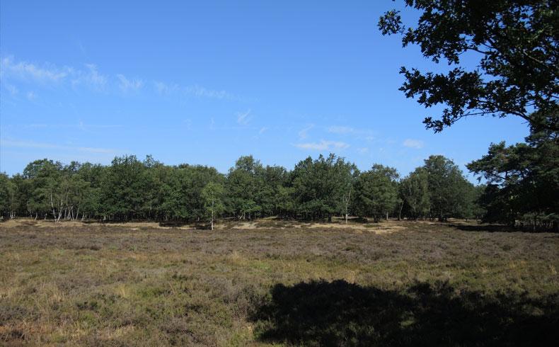 Orvelterzand – 6 heide 2 – voetzoekers