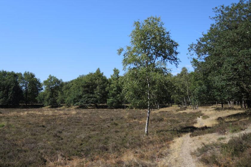 Orvelterzand – 7 pad over heide – voetzoekers