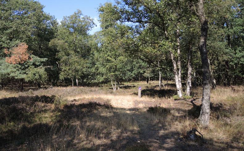 Orvelterzand – 8 overgang heide naar bos – voetzoekers