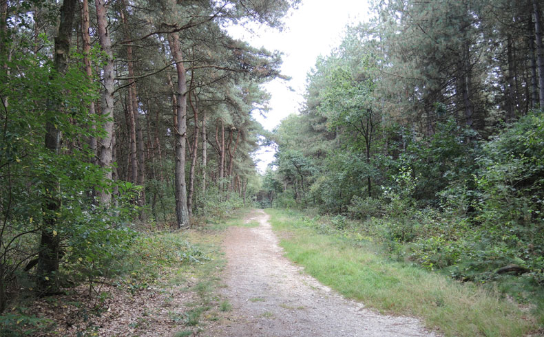 Rivierduinenroute 13 – voetzoekers