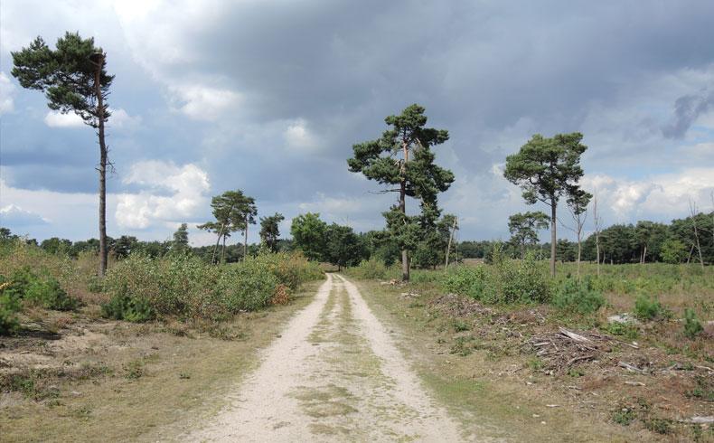 Rivierduinenroute 5 – voetzoekers