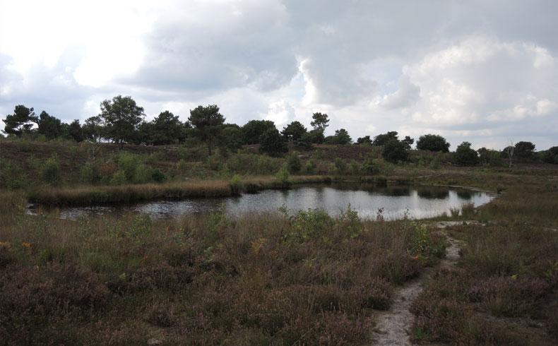 Rivierduinenroute 6 – voetzoekers