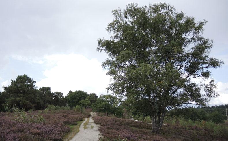 Rivierduinenroute 8 – voetzoekers
