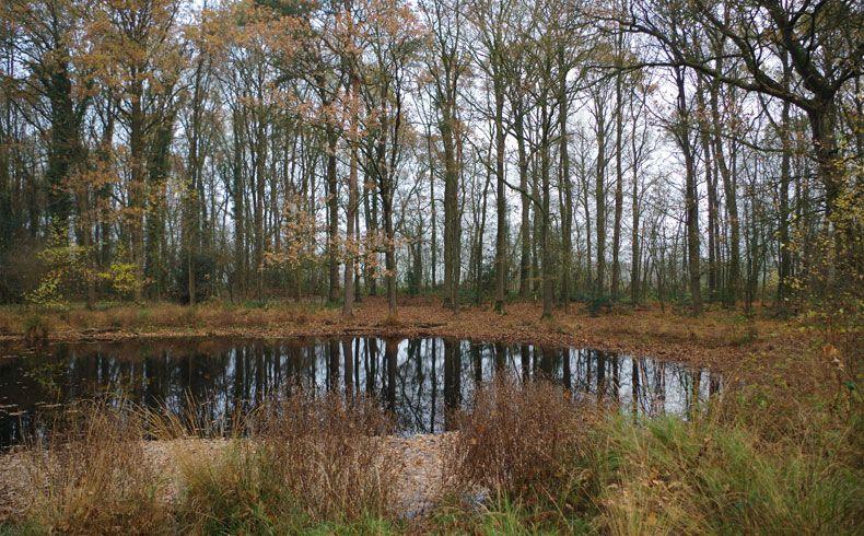 voetzoekers – Appelbergen – 5