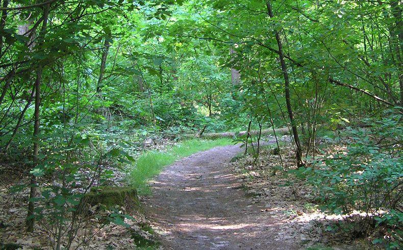 voetzoekers – Archeologische route Sleenerzand 1