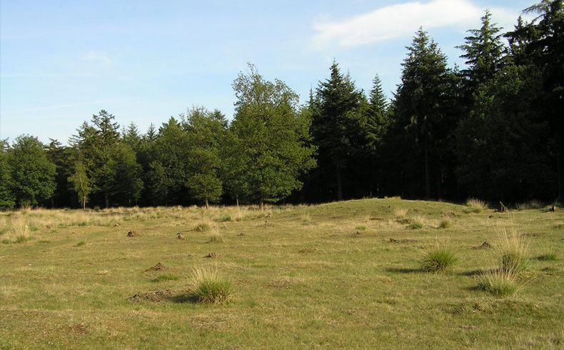 voetzoekers – Archeologische route Sleenerzand 13