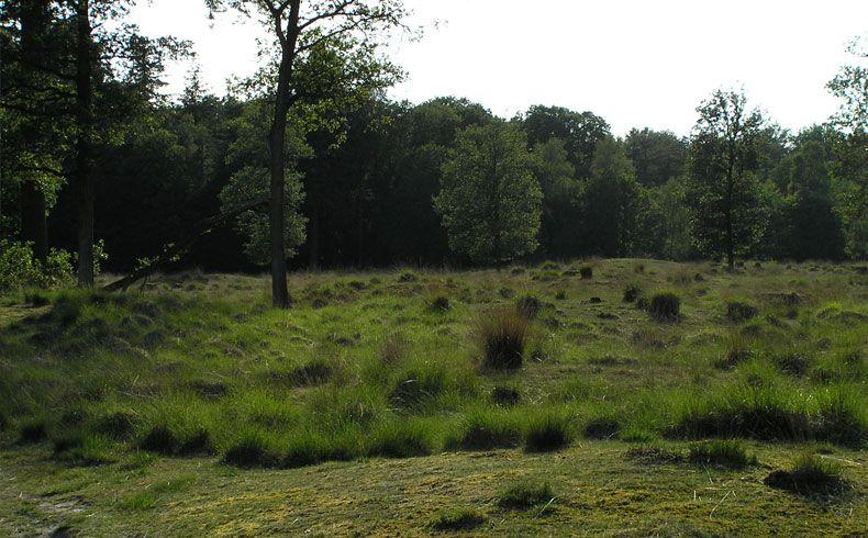 voetzoekers – Archeologische route Sleenerzand 15