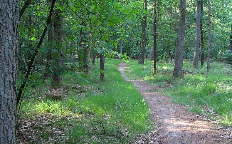voetzoekers – Archeologische route Sleenerzand 16