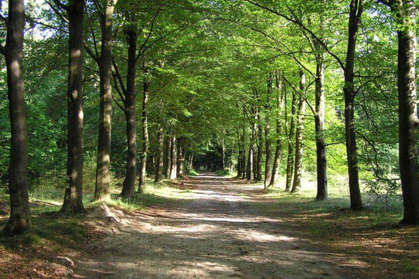 voetzoekers – Archeologische route Sleenerzand 2