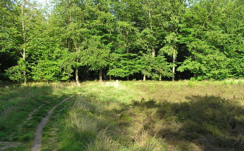 voetzoekers – Archeologische route Sleenerzand 5