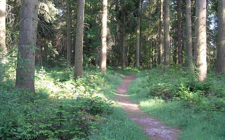 voetzoekers – Archeologische route Sleenerzand 7