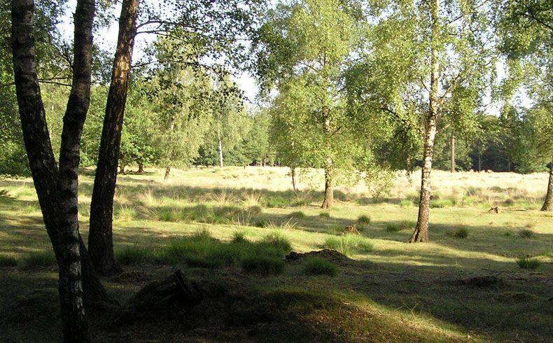 voetzoekers – Archeologische route Sleenerzand 9
