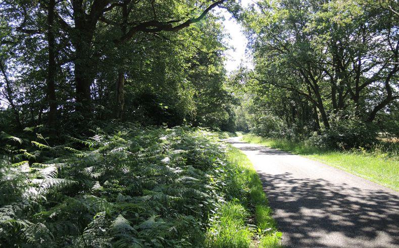 voetzoekers – Beekdal Hondstong route 10