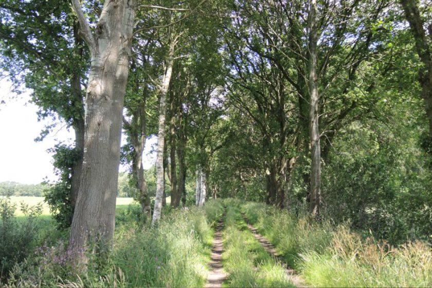 voetzoekers-voetzoekers – Beekdal Hondstong route 16-hondstong-route-16