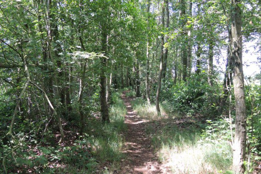 voetzoekers-voetzoekers – Beekdal Hondstong route 17-hondstong-route-17