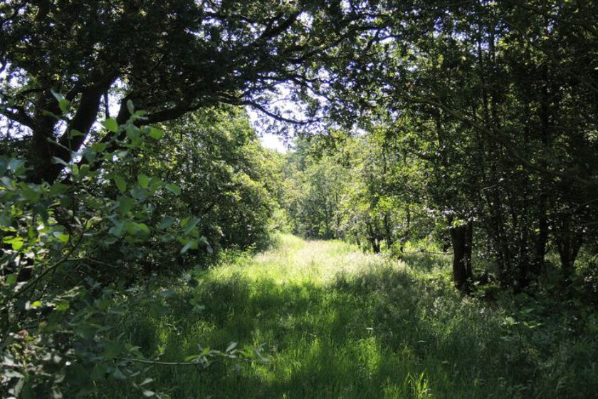 voetzoekers – Beekdal Hondstong route 5
